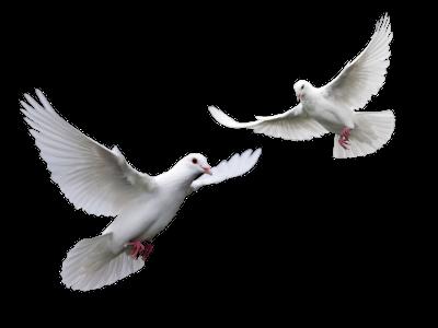 Létající holubice