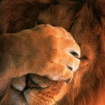 A lev nato, to raději nechci vidět.